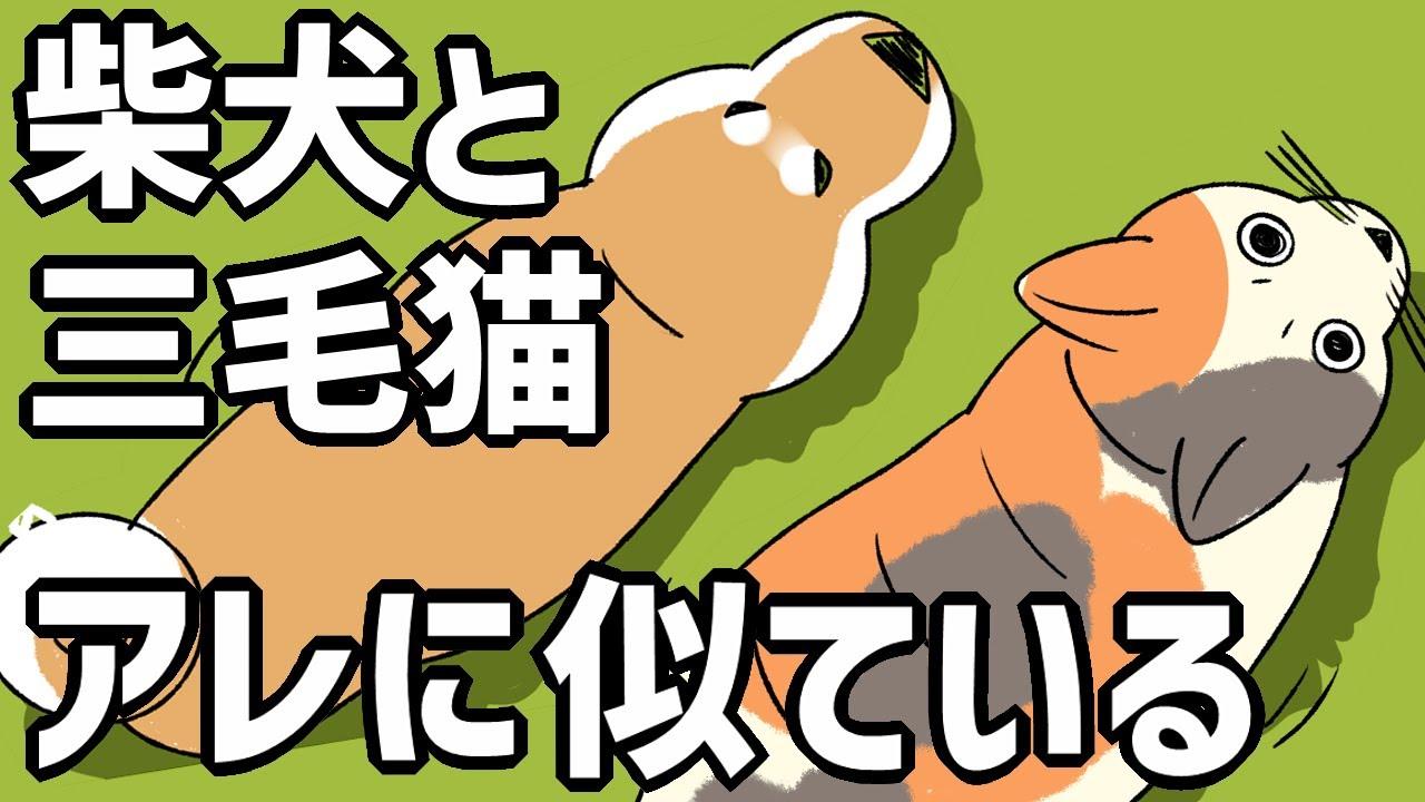 【柴犬と猫】アレに似ている。もしかして前世は…