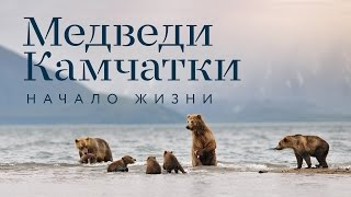 Фильм «Медведи Камчатки. Начало жизни»