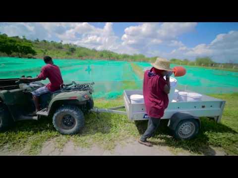 Ruvu Fish Farm