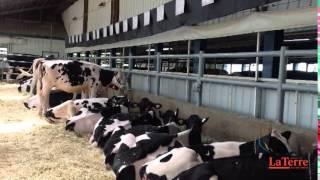 Le pique-nique Holstein, comme si vous y étiez!