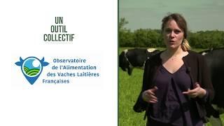 L'alimentation des vaches laitières - Point sur le pâturage à la fin avril 2018