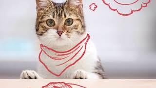какая миска нужна вашей кошке?