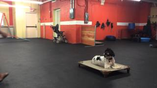 Aggressive Dog Rehab, Remote Collar Training