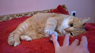 Cute Cat Plays With My Fingers