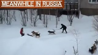 Guy Saves Girl From Pack Of Wild Dogs