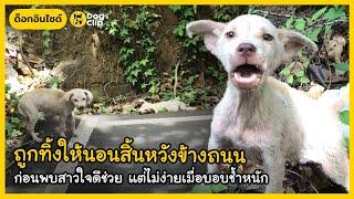 ถูกทิ้งให้นอนสิ้นหวังข้างถนน ก่อนพบสาวใจดีช่วย แต่ไม่ง่ายเมื่อบอบช้ำหนัก | Dog's Clip