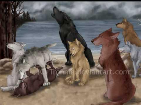 Quileute Werewolves