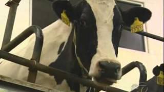 ABC 7's 190 North visits Fair Oaks Farms