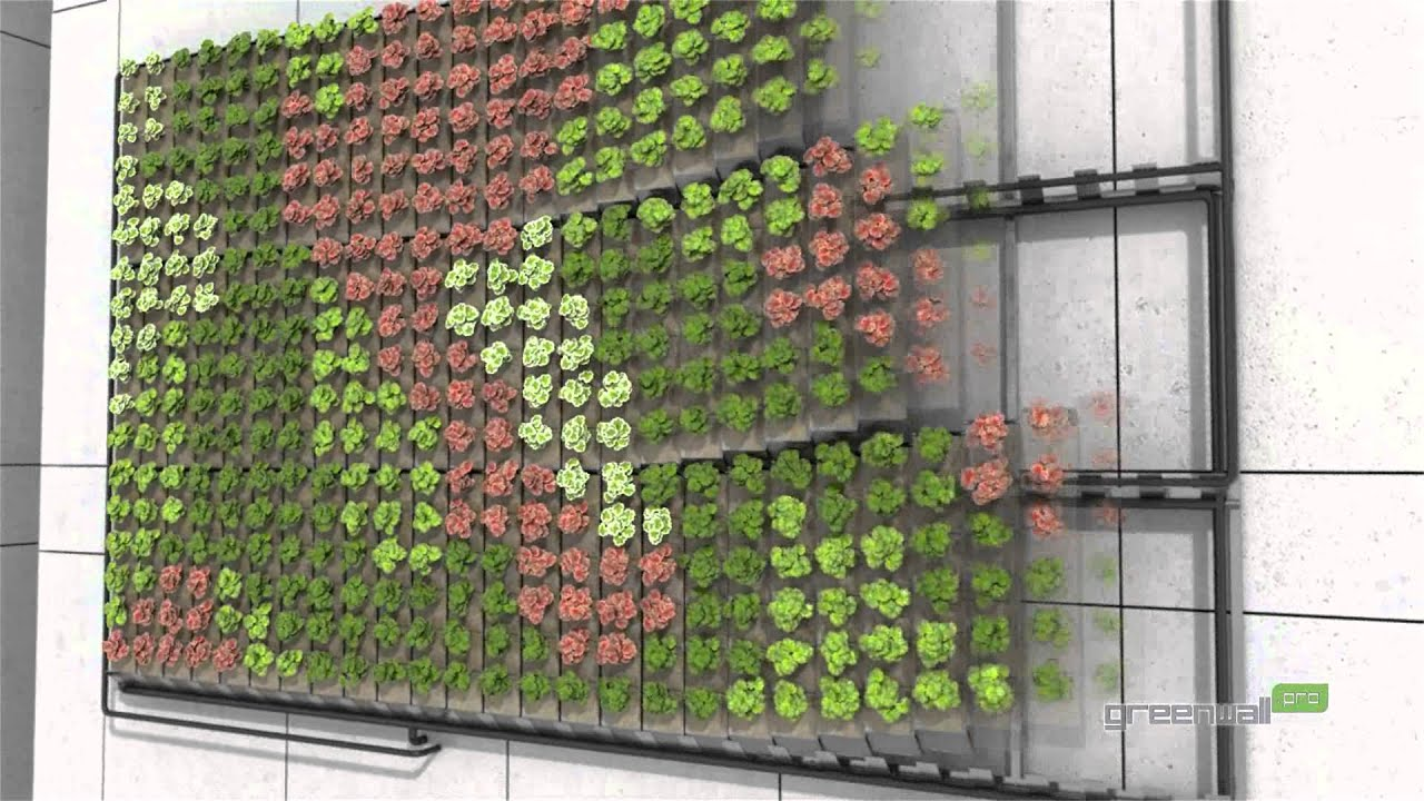 Hydroponic Store Melbourne Greenwall Pro Vertical Landscaping System Youtube