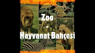 Hayvanat Bahçesi - Zoo Animals - İstanbul'da hayvanlarla bir gün - Way Funnier