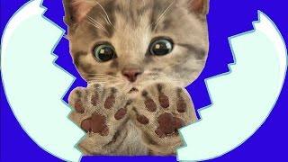 Little Kitten Cat Funny Video for Kids | My Favorite Cat Little Kitten | Pet Care Games for Baby
