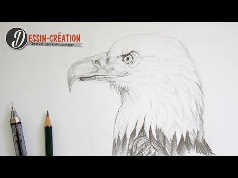 comment dessiner un aigle portrait animalier youtube. Black Bedroom Furniture Sets. Home Design Ideas