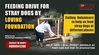 Feeding Drive for Stray Dogs By Loving Foundation | Love Channel