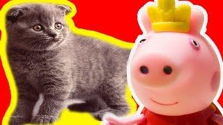 Свинка Пеппа на русском КОТЕНОК ПУШОК ТРЕЙЛЕР Мультфильм для детей  Peppa Pig