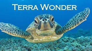 The Amazing Sea Turtle