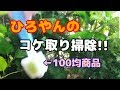 ひろやんのメイン水槽コケ取り掃除!!【アクアリウム・熱帯魚】