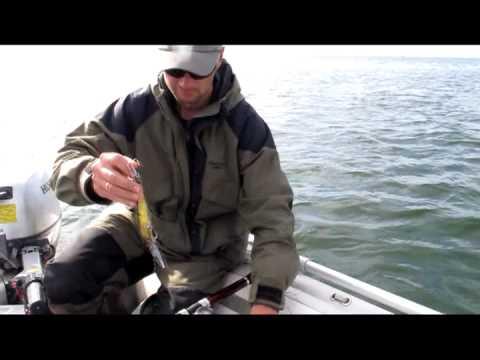 ловля морской судак
