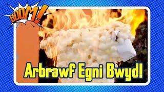 Arbrawf Egni Bwyd   Food Energy Experiment