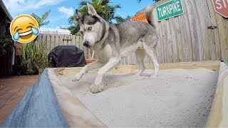 Building My Husky a Sandbox! (600K SUBSCRIBERS)
