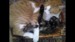 Rizhik and Maya cuddling