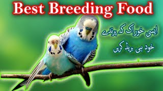 Best Breeding Food for Birds. What  are the benefits of Palak for Birds Video No.45