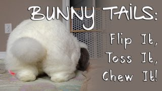 BudgetBunny: Bunny Tails | Flip It, Toss It, Chew It!