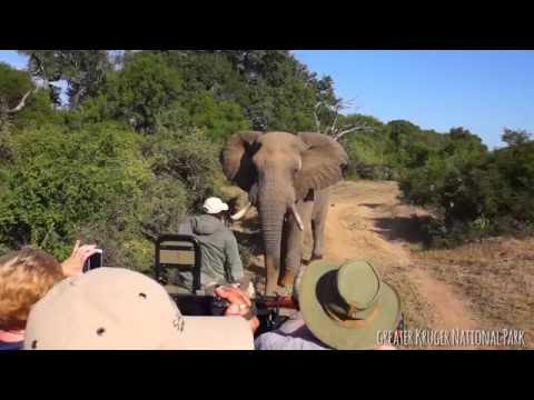 Getting Up Close and Personal in Kruger