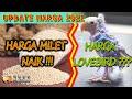 Update Harga Burung Lovebird  Lengkap Mutasi Biola Pale Fallow Hope Hobbies  Mp3 - Mp4 Download