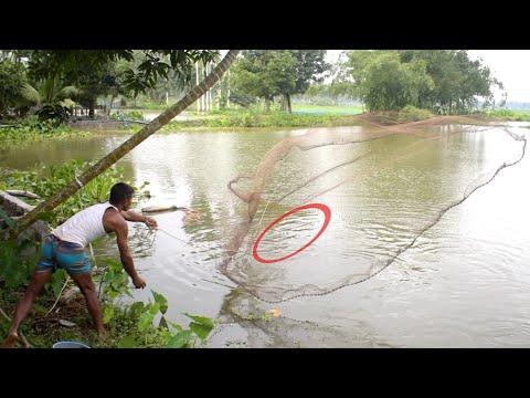 Net Fishing |Traditional Cast Grass Carp Fish | Net Fishing  In Village Pond | P-62