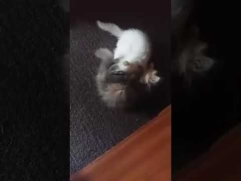 crazy Funny cats and kittens who frequently fight by cute cats