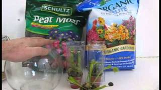 Venus Fly Trap Terrarium -feeding -care -transplanting