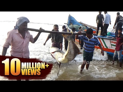 #Amazing Big Fish Hunting in Sea | Fishermen in a Sea Boat catching Fish | King Fish Hunting
