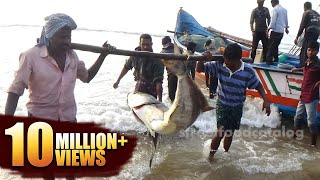 #Amazing Big Fish Hunting in Sea | Fishermen in a Sea Boat catching Fish | King Fish Hunting