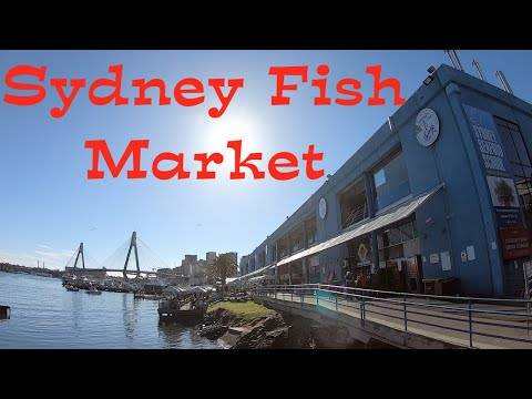 Sydney Fish Market - Seafood Market Australia (HD)