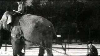 Reclame Oldtimers - Een olifant in Leeuwarden