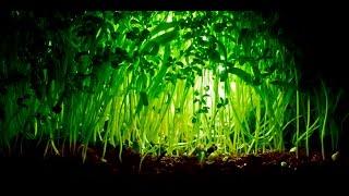 Анатомия и морфология растений | Строение корня, стебля и листа (Ботаника) | ОГЭ и ЕГЭ [1.0]