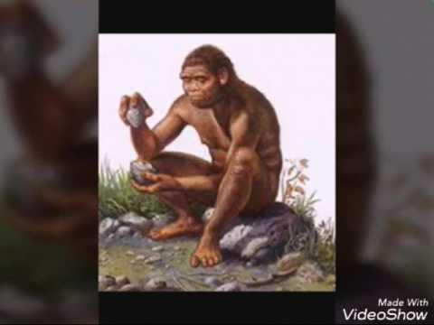 Homo. Erectus..