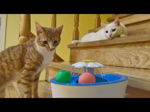 How Cats Approach A New Object  Lazy Cat vs Curious Cat