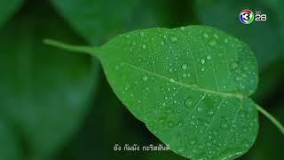 ตะวันส่องธรรม-tawansongtham-17-10-61-ch3thailand