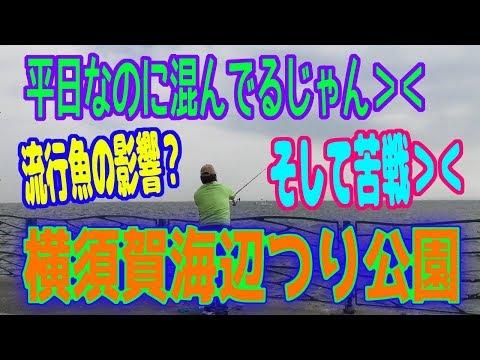 釣り動画ロマンを求めて 287釣目(横須賀海辺つり公園)