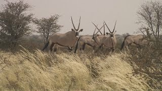 Kalahari Gemsbok National Park birding safari
