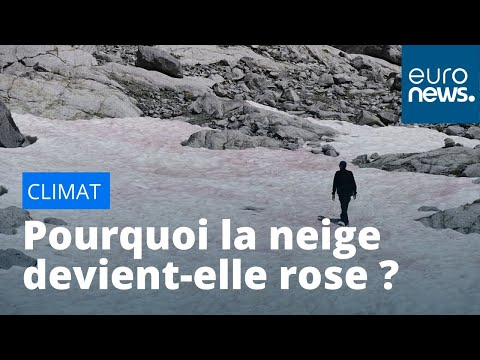 euronews (en français): Climat : mais pourquoi la neige devient-elle rose dans les Alpes en Italie ?