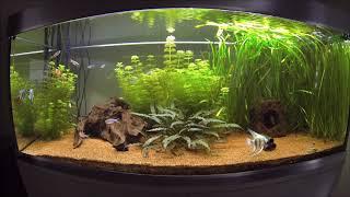Die Stickstoffverbindungen Nitrit und Nitrat im Aquarium