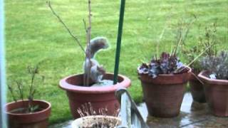 How To Keep Squirrels Off A Bird Feeder Table