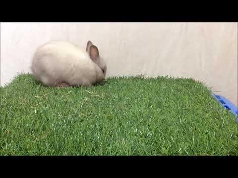 กระต่ายแคระตัวเล็กน่ารัก ร่าเริง