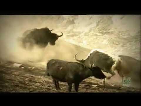Tras la senda de Buda. A la sombra del Himalaya (2001)