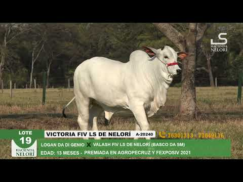 Lote 19 Victoria FIV LS