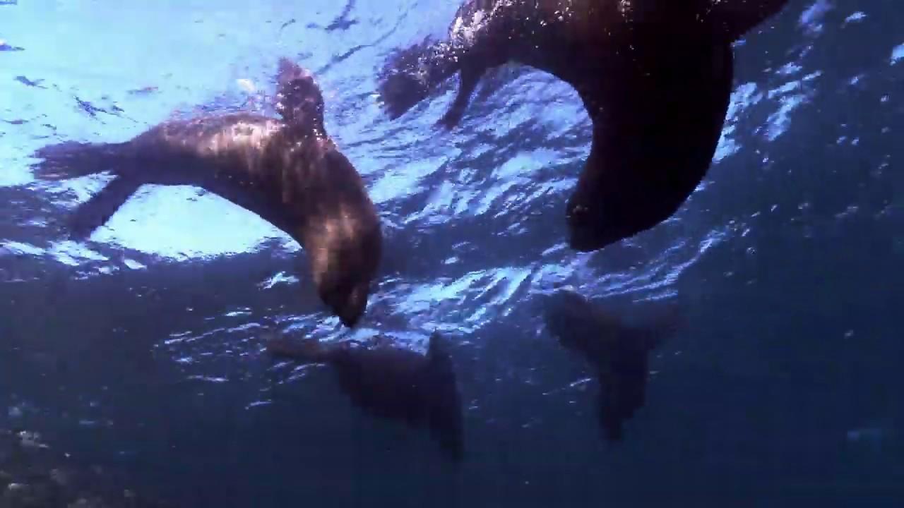 Download IMAX 海洋世界 IMAX Wild Ocean 2008 Blu ray 720p x264 DTS