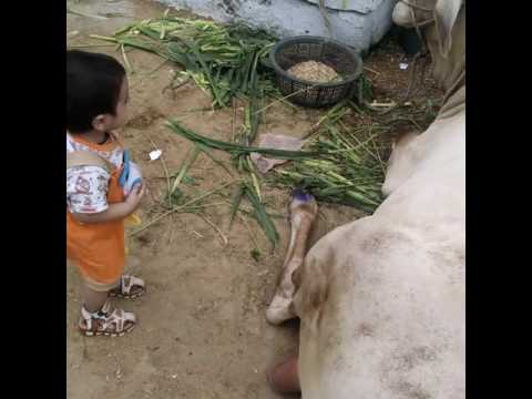 Kid wid cow