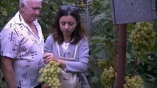 Экскурсия в Кринички .Золотое Гроно Украины 2 день. Клип 5